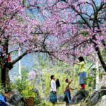 Sapa-CatCat-HamRong-Fansipan-LaoChai-TaVan-17