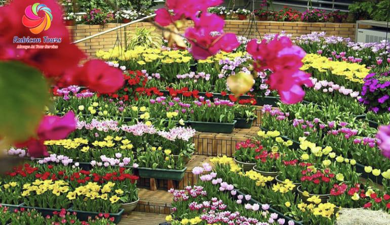 Da-Lat-Flower-City-Flower-Park-Flower-Garden-3