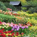Da-Lat-Flower-City-Flower-Park-Flower-Garden-7