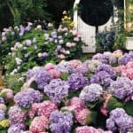 Da-Lat-Flower-City-Flower-Park-Flower-Garden-8