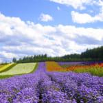 Da-Lat-Flower-City-Flower-Park-Flower-Garden-5