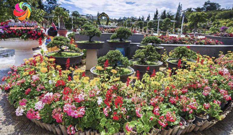 Da-Lat-Flower-City-Flower-Park-Flower-Garden-6