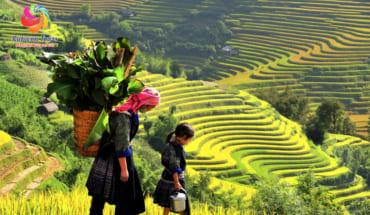8D7N~Hanoi 4*~Halong Bay(Overnight On Cruise 4*) ~Sapa Valley 4 * – Fansipan~ Ninh Binh
